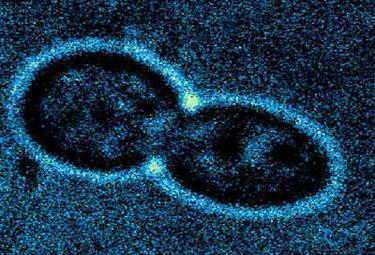 nanocapsuleR375_20mag09
