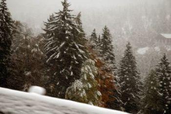 neve-alberiR400