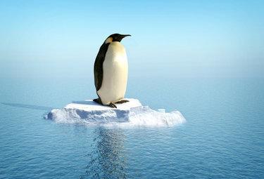 pinguinodesolatoR375_30nov09