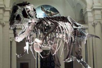 tirannosauro_scheletro_R400