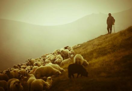 Canto-notturno-di-un-pastore_R439