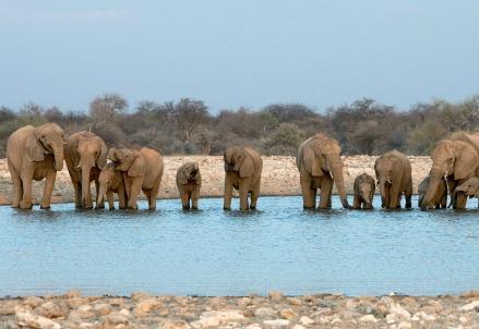 elefanti-africa-namibia