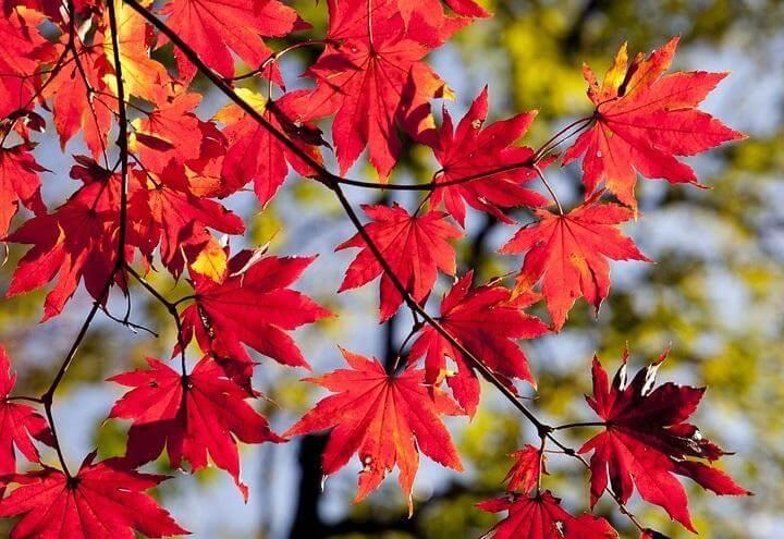 autunno_nuova_stagione_pixabay