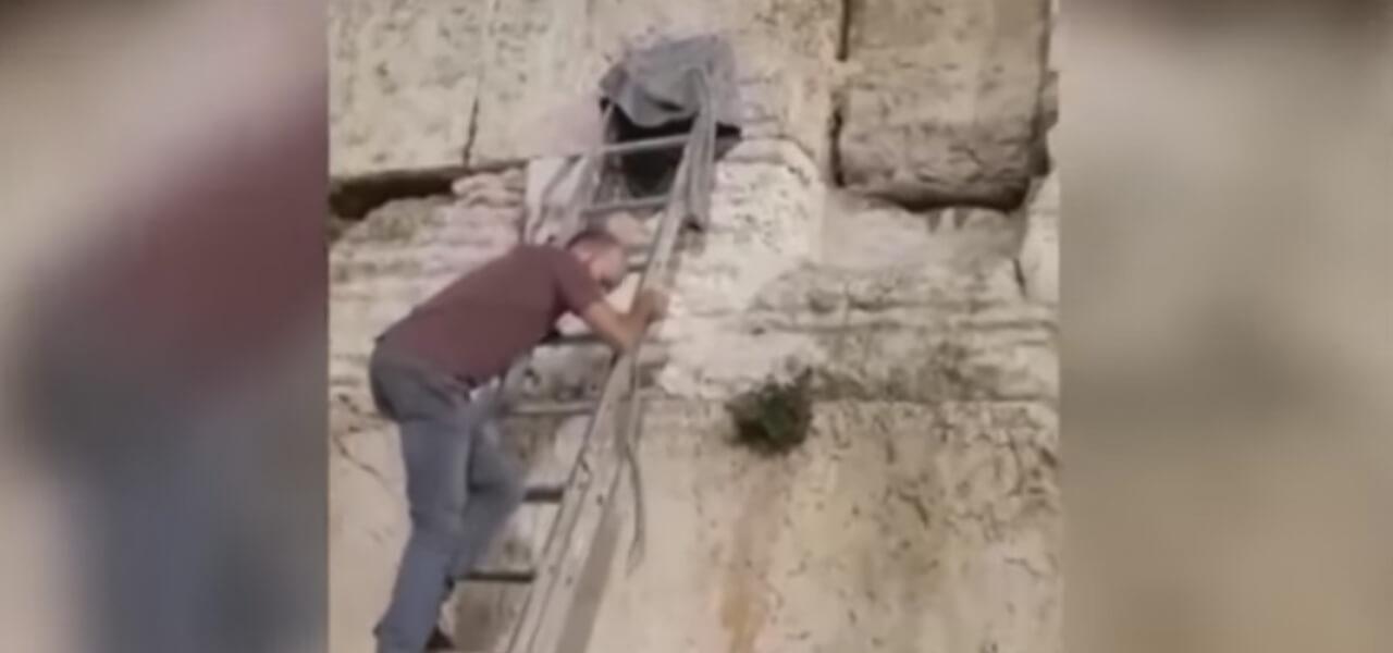 Serpente esce dal Muro del Pianto, Israele