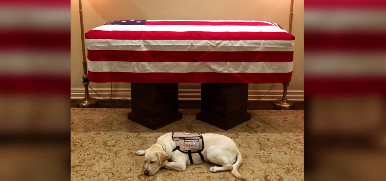 Sully, cane di George Bush senior