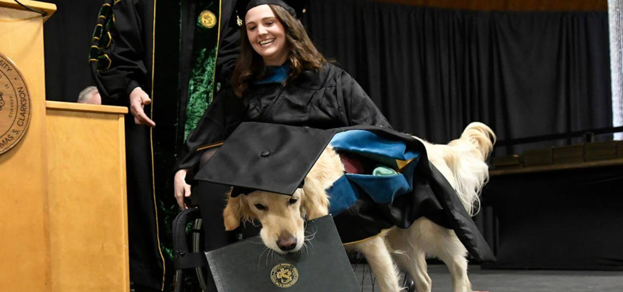 Il cane laureato