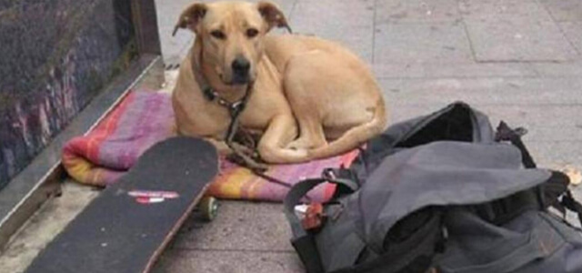Cane ucciso a Barcellona da un agente