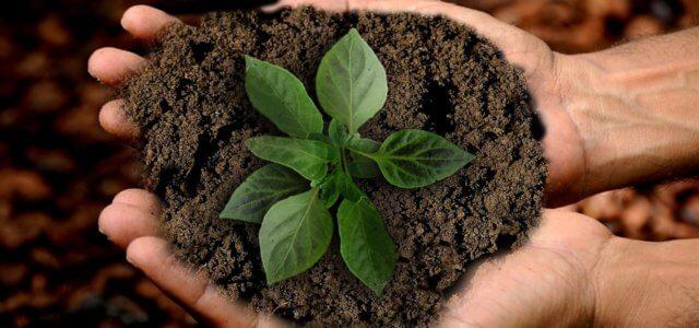 terra fertilizzante pixabay 640x300