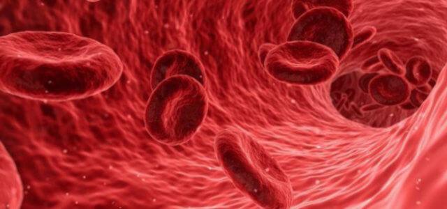 sangue 2019 web 640x300