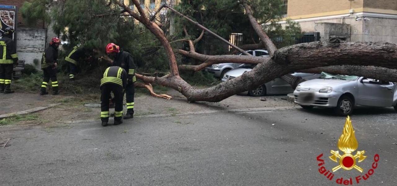 Crolla albero in centro a Roma