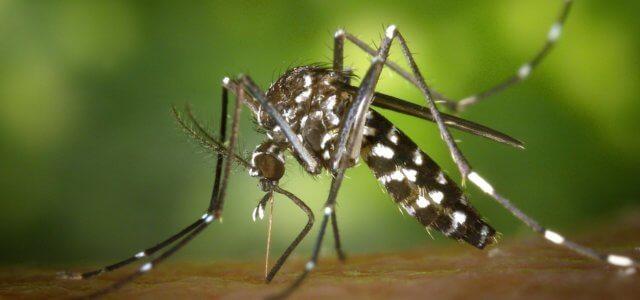 zanzare virus che fa scoppiare il cervello