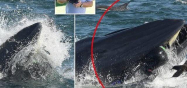 balena 2019 web 640x300