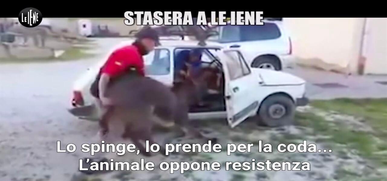 tony provenzano asino iene