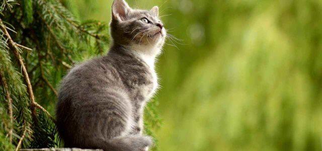 gatto 2019 pixabay 640x300