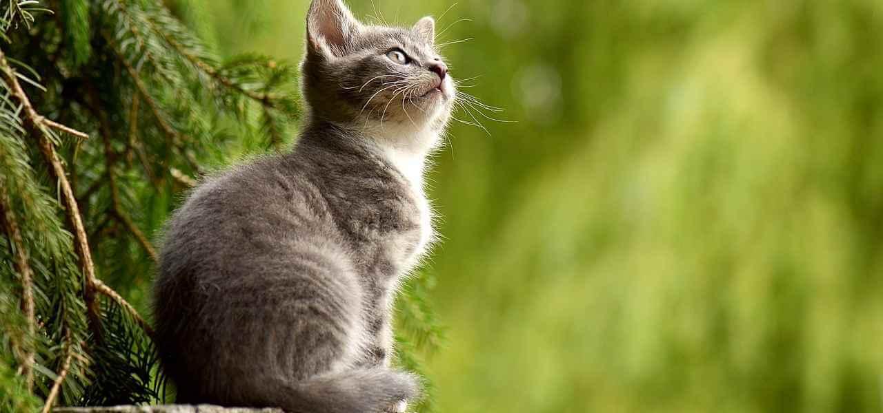 gatto 2019 pixabay