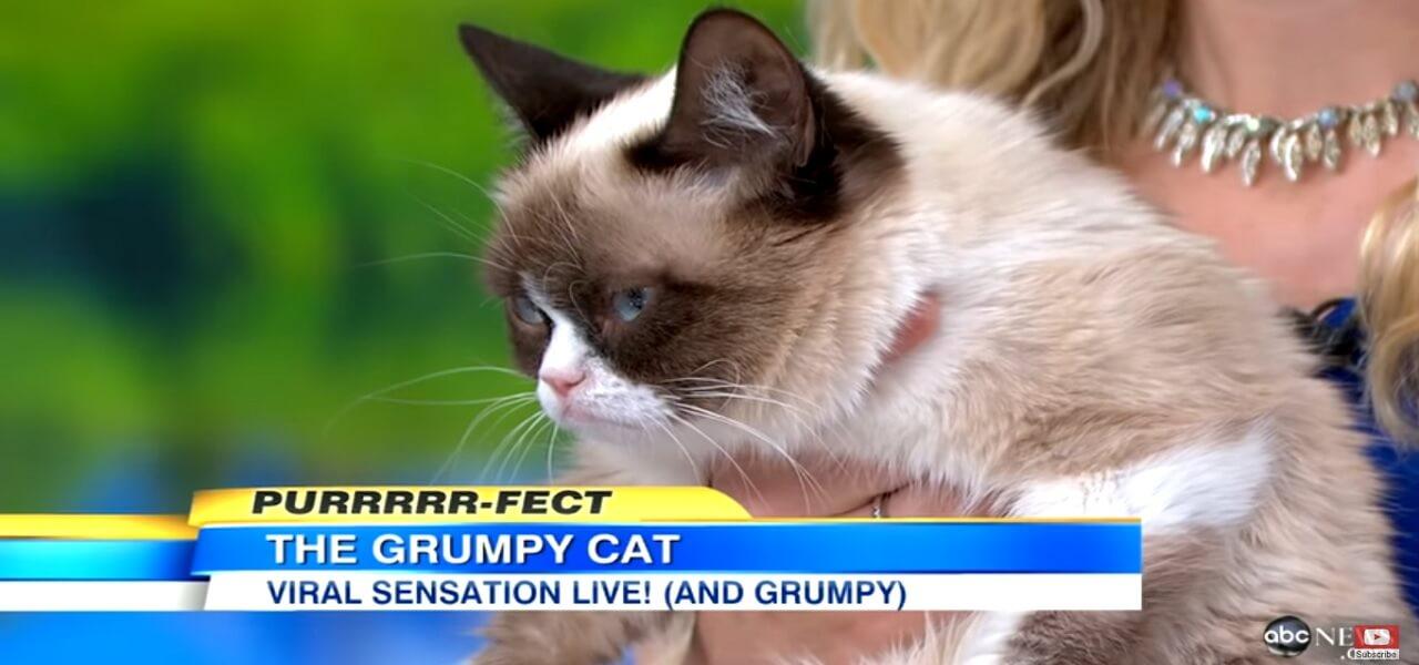 Grumpy Cat è Morto Gatto Web Star Re Dei Meme 16 Milioni Di
