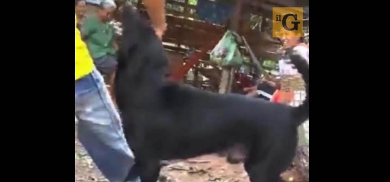 Cane disabile salva neonato sepolto vivo