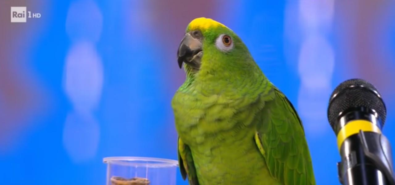 pappagallo portobello 2019 youtube