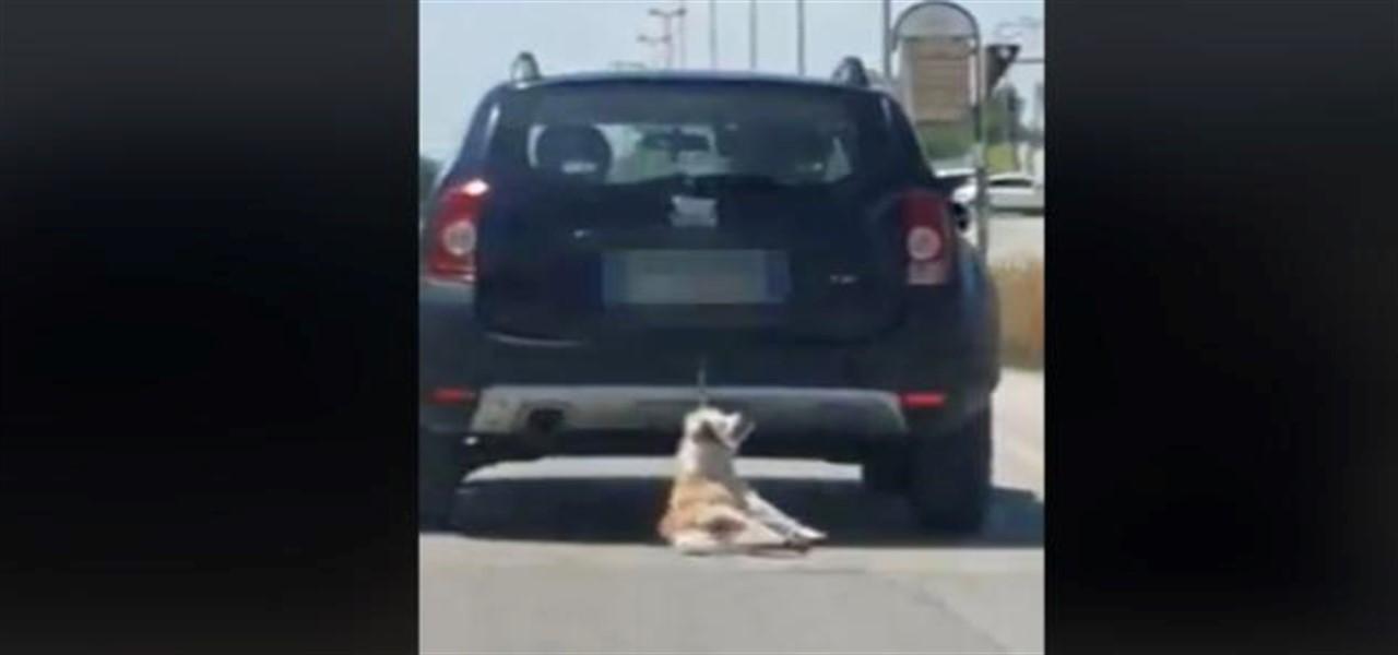 cane trascinato trani