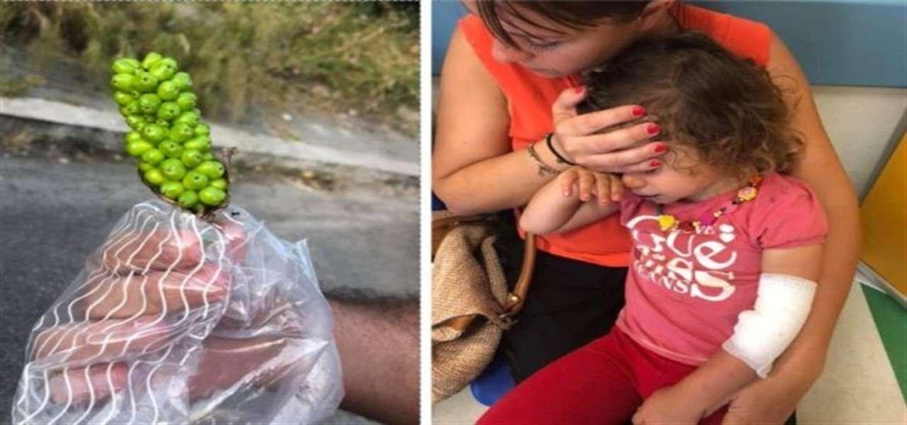 bambine avvelenate bacche roma facebook