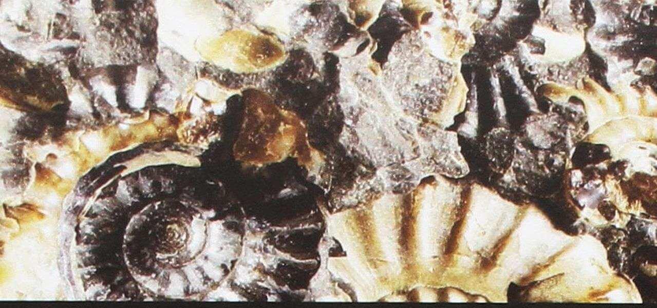 fossili aper