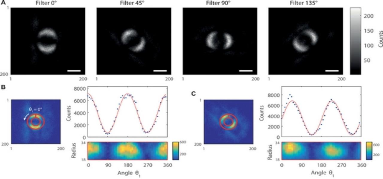 entanglement quantistico