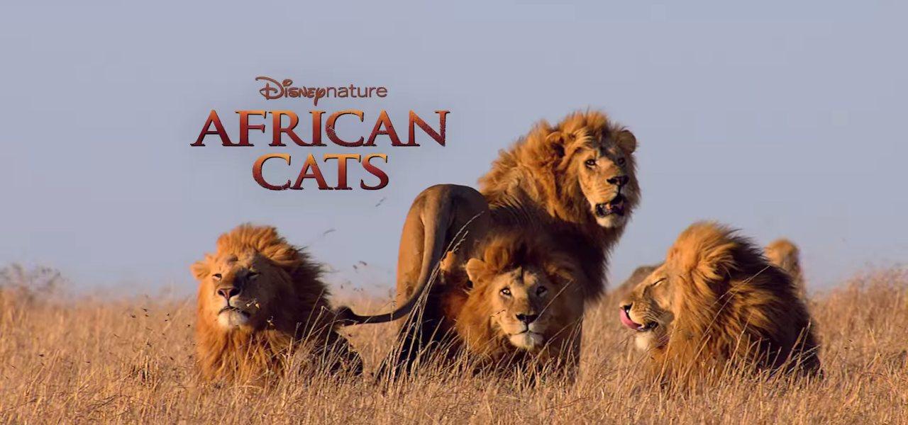 african cats Il regno del coraggio 2019 film