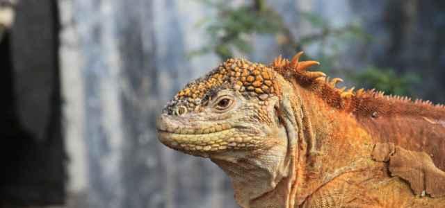 natura iguana 1 pixabay1280 640x300