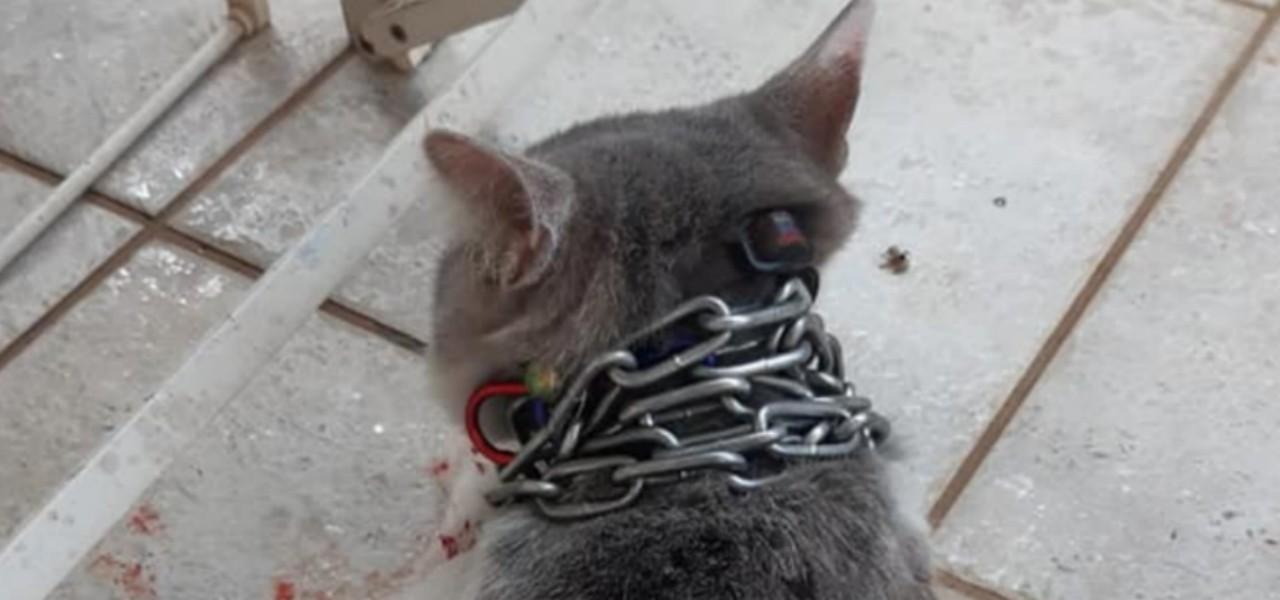 gatto catena al collo latina 2019 web