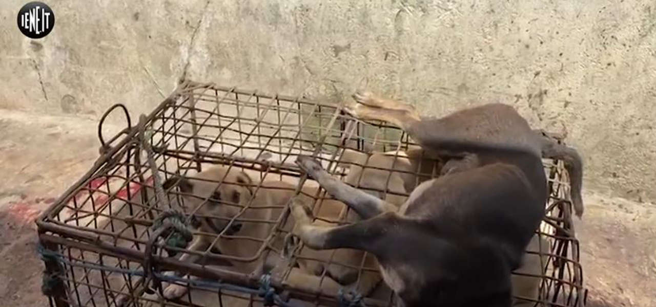 massacro cani indonesia iene