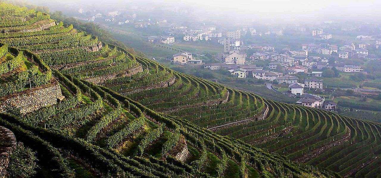 luoghi del vino apertura