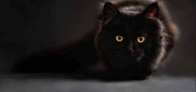 gatto nero pixabay 2020 640x300