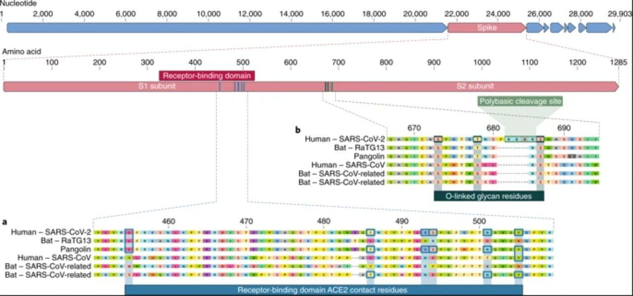 coronavirus genoma coronavirus naturemedicine