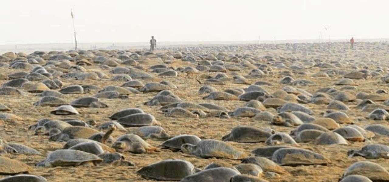 tartarughe marine 2020 instagram