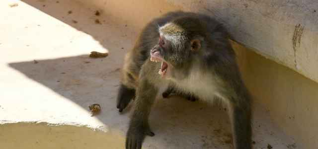Macaco zoo lapresse 2020 640x300