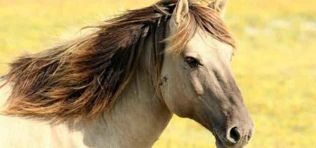 cavallo 2019 pixabay 640x300