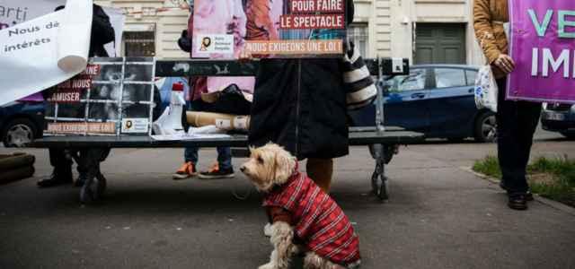 Diritti animali