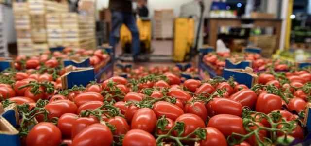 Pomodori ortomercato lapresse1280 640x300