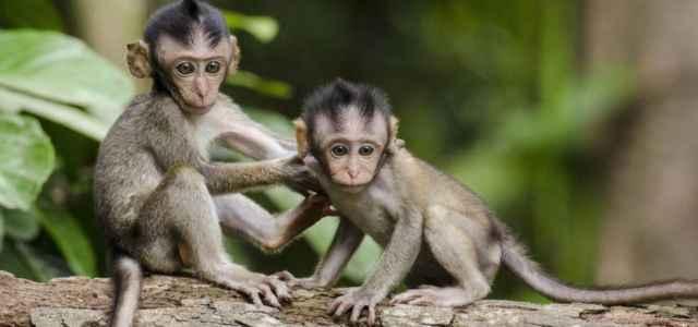 scimmie pixabay 640x300