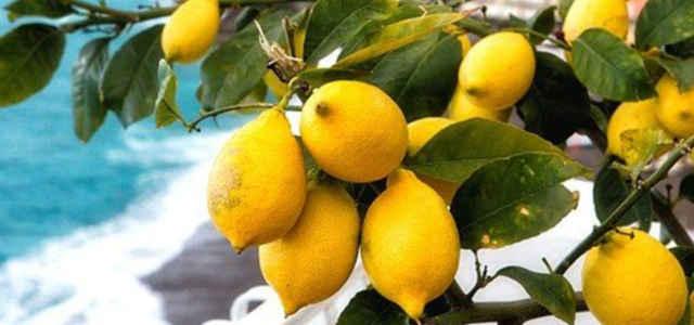 Limoni amalfi 1280 640x300