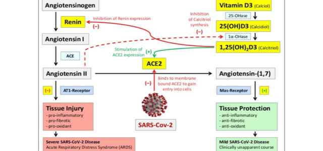 studio vitamina d covid 640x300